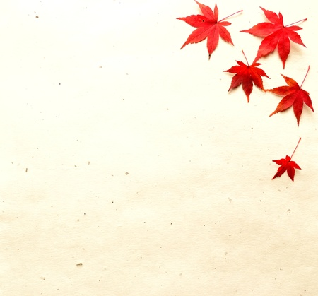 Red autumn maple leaves on Japanese paper