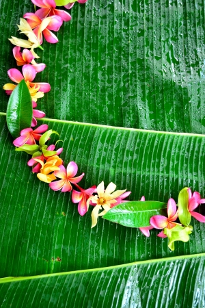 Wreath of tropical flowers on banana leaf photo