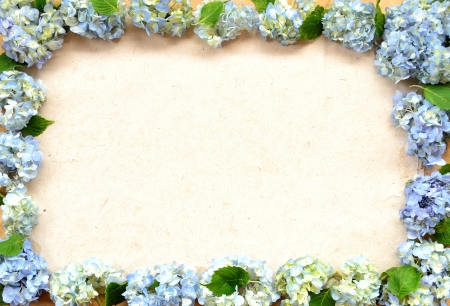 Frame of blue hydrangea photo