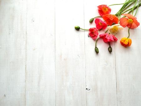 Colorful poppies Zdjęcie Seryjne