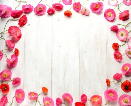 flower background: Pink poppies on white wooden background