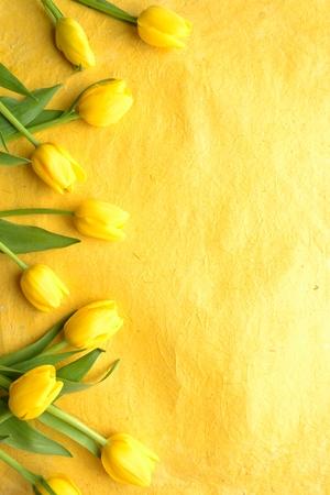 Yellow tulips on yellow background 写真素材