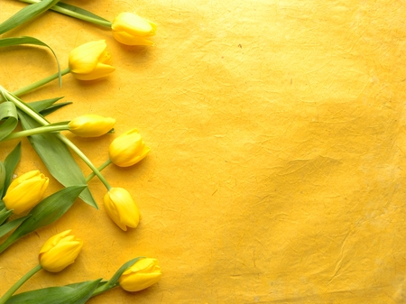 Yellow tulips on yellow background Imagens