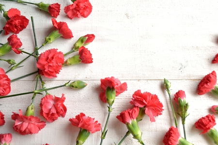 carnations: Red carnations frame Stock Photo