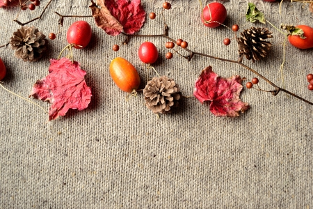 Japanese snake gourds, pine cone and red leaves on the knited Banque d'images - 112697276