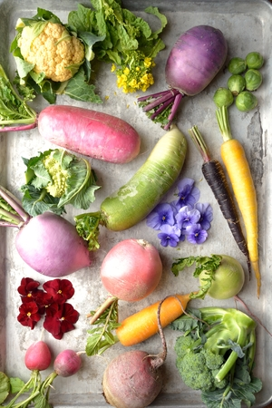 edible: Colorful root vegetables with edible flowers on the silver background