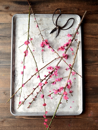 ume: Red ume Japanese apricot blossoms with scissors on the silver tray
