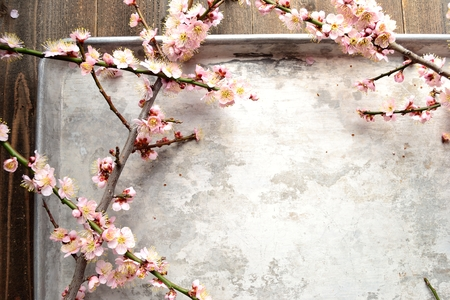 silver tray: Pale pink ume Japanese apricot bloosoms with silver tray