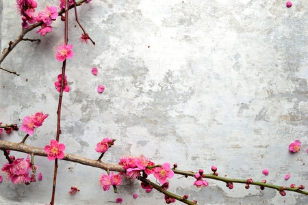 ume: Red ume Japanese apricot blossoms on the silver background