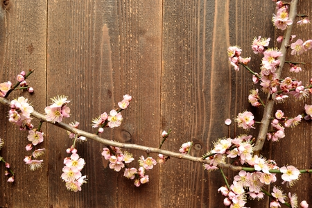 ume: Pale pink ume Japanese apricot blossoms on the wooden background