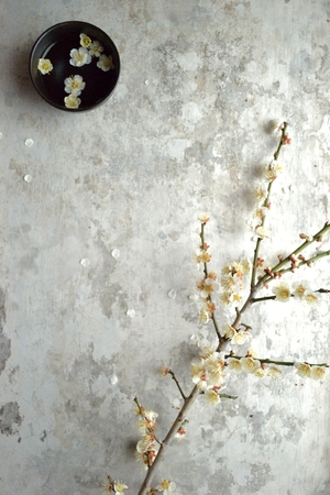 ume: Japanese apricot white ume blossoms with black small bowl