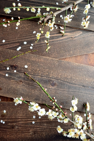 ume: White ume Japanese apricot blossoms on the wooden boards