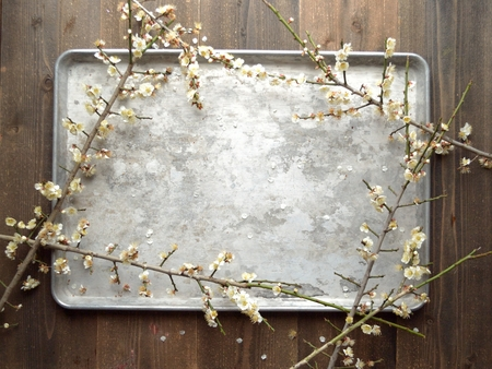 silver tray: White ume Japanese apricot blossoms on the silver tray Stock Photo
