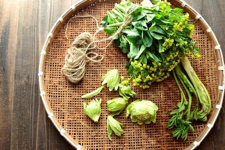 菜の花と日本の食用の野生植物