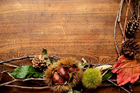 Chestnuts in burrs with fall leaves