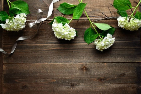 white hydrangeas with silver ribbon on the black wooden backgrpund