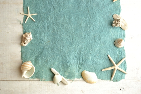 White shells on the sky blue paper.frame