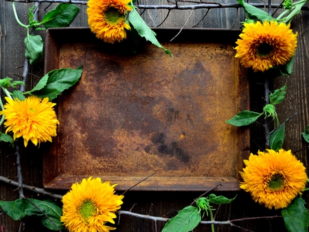 Sunflowers with rusted tray.frame