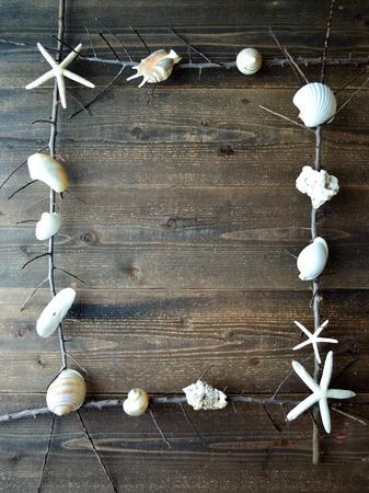 死んだ branches.frame と白い貝殻 写真素材