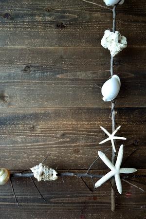 흰색 바다 포탄 죽은 branches.frame 스톡 콘텐츠
