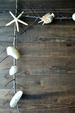 White sea shells with dead branches.frame Imagens - 82932492