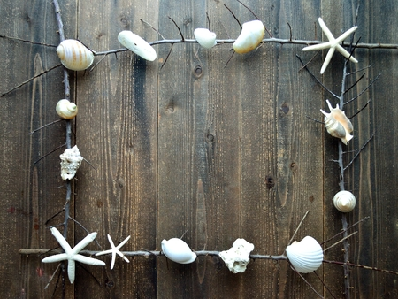 White sea shells with dead branches.frame