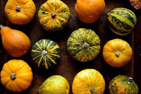 Colorful pumpkins Stock Photo - 107383258