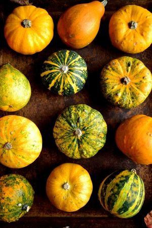 Colorful pumpkins Stock Photo - 107383259