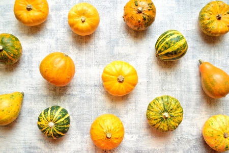 Colorful pumpkins on the white background