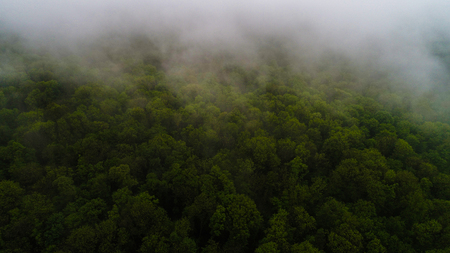 Green forest in morning fog seen from above