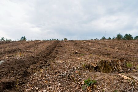 A stump after deforestation on fertile soil on cloudy weather and some trees in the background, aligned to the right..