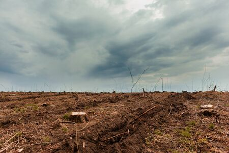 Tree stumps on fertile soil with gray clouds from above and tractor marks.