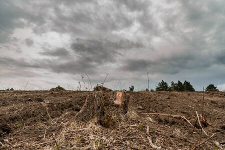 A stump after deforestation on fertile soil on cloudy weather and some trees in the background and gray clouds, aligned in the center.