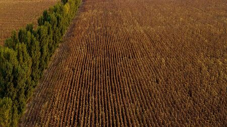 Aerial view of a golden wheat field and a tree line.