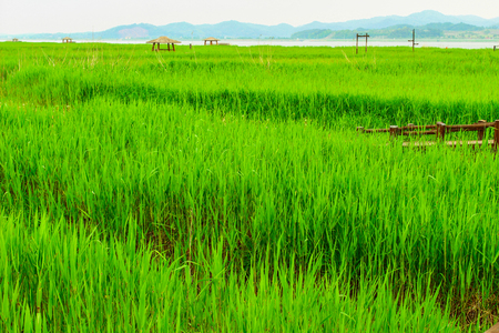 republic of korea: Republic of Korea South Chungcheong Province Seocheon landscape