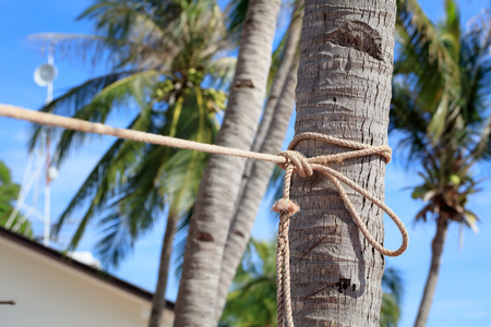 Rope with tropical palm tree Stock Photo
