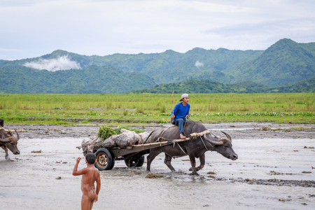 Unidentified Philippine man rides a cow carriage across the river near Pinatubo Mountain on Aug 27, 2017 in Santa Juliana, Capas, Central Luzon, Philippines3
