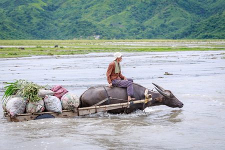 Unidentified Philippine man rides a cow carriage across the river near Pinatubo Mountain on Aug 27, 2017 in Santa Juliana, Capas, Central Luzon, Philippines3 Imagens - 85377715