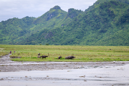 crater lake: Philippines countryside scenery - mountains, carabao, water Stock Photo