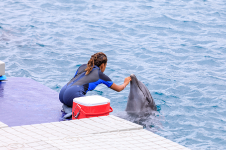 SUBIC BAY, MANILA, PHILIPPINES : JAN 28, 2018 - Instructor with Dolphin at Ocean Adventure Subic bay Editorial