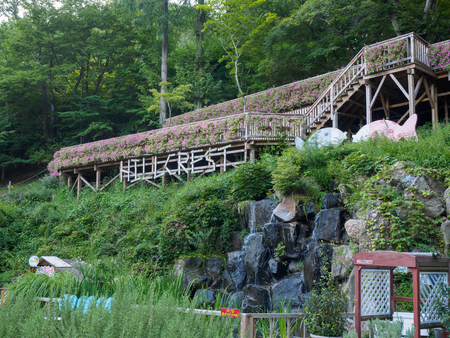 Daegu, South Korea - Aug 19, 2018 : Hillcrest (Hub Hills), Eco theme park featuring gardens, kids rides & an adventure area with zip-lining & rock-climbing. Editorial