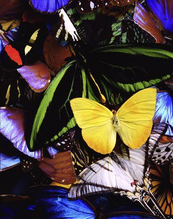 dozens: Dozens of butterflies layered upon each other.