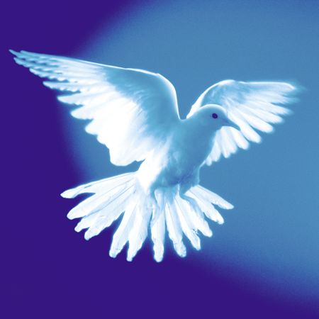 A white dove flying in front of a colored background.