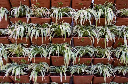 ソート: 花台の美しい木々 を並べ替える 写真素材