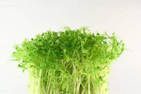 bean sprouts isolated on a white background photo