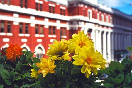 Flowers Stok Fotoğraf