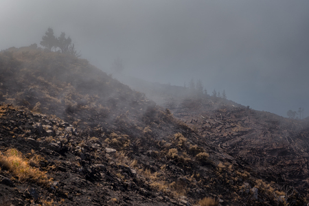 terribly: World heritage forests of Madeira terribly destroyed by fires in 2016. Some of trees have enormous will of life and survived this disaster. Stock Photo