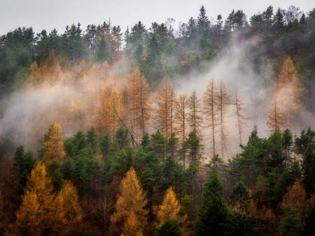 Mist in the forest growing on steep slope. Autumn colors of orange and yellow Stock fotó