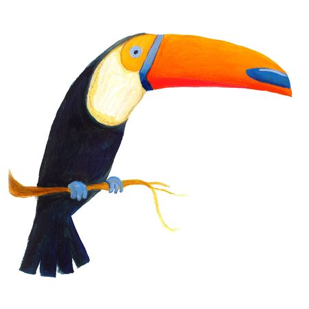colorful toucan  Stock Photo