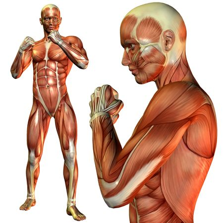leg muscle fiber: 3D rendering of the muscle man in a fighters pose